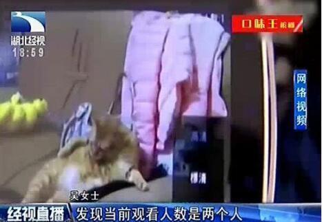 """为了可以实时看到自己在家饲养的两只宠物猫,不久前,吴女士从团购网站上购买了一款家用摄像机。到货后,吴女士把摄像机的镜头朝床铺和浴室的方向安装。最近的一天晚上, 吴女士在洗澡前,突然听到摄像机里传出怪声,当她登入手机APP 查看监控画面时,把自己吓傻了,""""我登入系统看到有两个人正在观看""""。"""